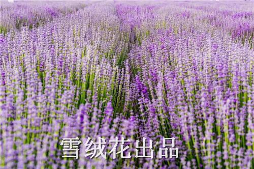 微信图片_20190510145121.jpg