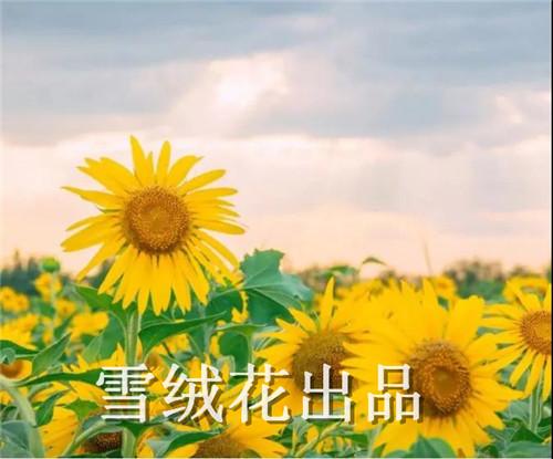 微信图片_20190510145132.jpg